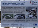Taugl-Kiesbankgrashuepfer-pullus-Begleitinformation_Heuschreckenmassnahmen